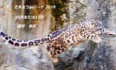 Wandering Leopard 2018