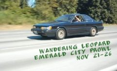 Wandering Leopard  Emerald City Prowl