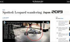 Wandering Leopard: Japan 2019 pt 1