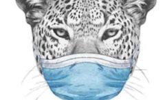 Wandering Leopard in LA - plan